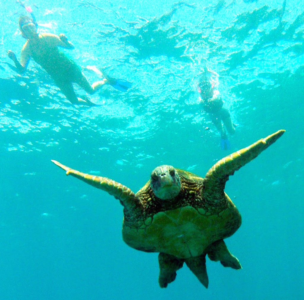 travel with kate snorkel kayak maui turtle