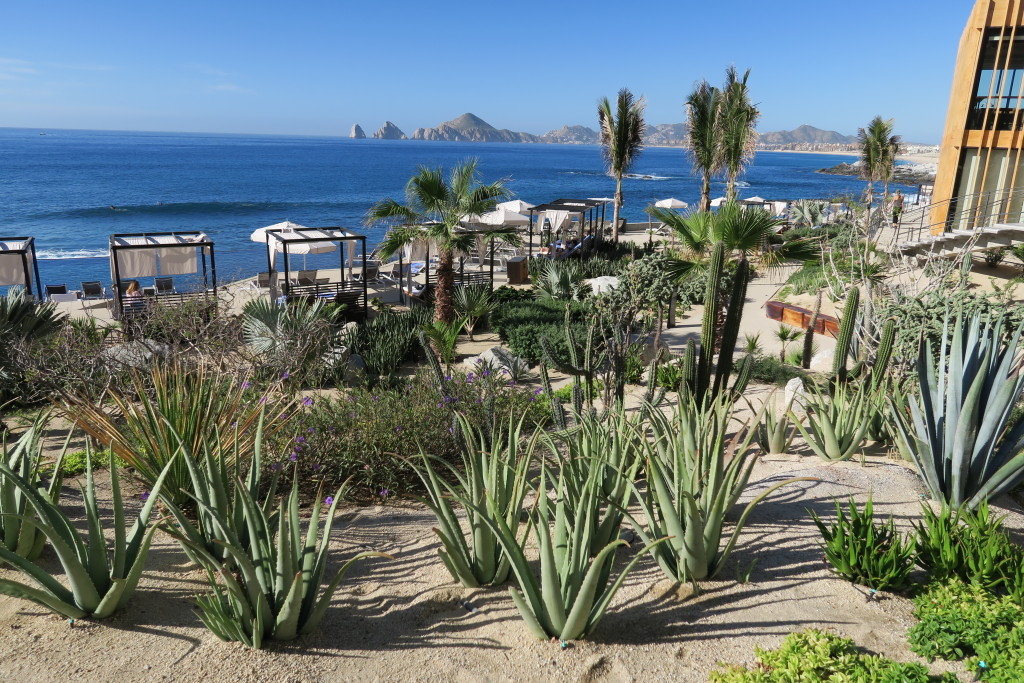 Hotel Grounds The Cape in Cabo